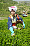 Vrouwen die theeblaadjes oogsten Royalty-vrije Stock Afbeelding