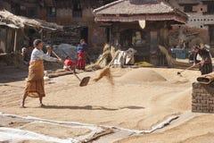 Vrouwen dorsende korrel Stock Foto's