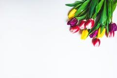 Vrouwen ` s dag 8 maart-achtergrond met de lentebloemen Stock Fotografie