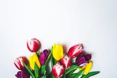 Vrouwen ` s dag 8 maart-achtergrond met de lentebloemen Stock Foto