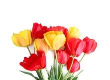 Vrouwen` s dag, moeder` s dag, geïsoleerde tulpenbloem Stock Afbeelding
