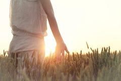 Vrouwen` s hand wat betreft tarweoren bij zonsondergang Stock Afbeelding
