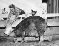 Vrouwen voedend varken (Alle afgeschilderde personen leven niet langer en geen landgoed bestaat Leveranciersgaranties dat er geen stock fotografie