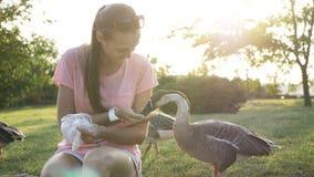 Vrouwen voedende gans van palm Royalty-vrije Stock Afbeelding