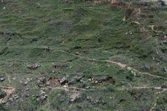 Vrouwen weidend vee in chobar heuvels royalty-vrije stock afbeeldingen