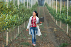 Vrouwenagronoom in de boomgaard stock fotografie