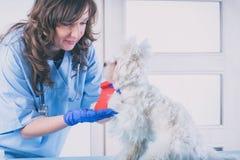 Vrouwendierenarts met een hond royalty-vrije stock afbeelding