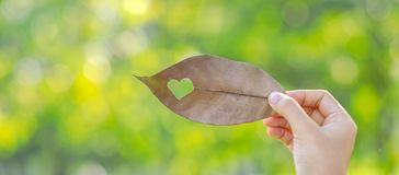 Vrouwenhand die droog blad met hartvorm houden op groene natuurlijke achtergrond in de tuin openlucht Sociale Verantwoordelijkhei stock fotografie