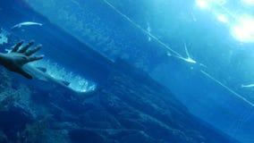 Vrouwenhand en aquarium op het plafond stock footage
