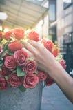 Vrouwenhand met bloemen in vaas Stock Afbeeldingen
