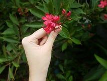 Vrouwenhand wat betreft roze bloemen Royalty-vrije Stock Afbeeldingen
