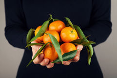 Vrouwenholding in handenmandarijnen of mandarins met groene bladeren stock fotografie