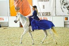 Vrouwenjockey in een donkerblauwe kleding die een wit paard berijden Tijdens de show Internationale Ruitertentoonstelling Stock Foto