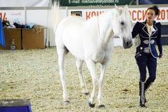Vrouwenjockey in een donkerblauwe kleding en een wit paard Tijdens de show Moskou die Hall International Equestrian Exhibition be Stock Foto's