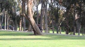 Vrouwenjogging in winderig park stock footage