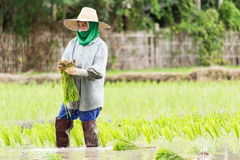 Vrouwenlandbouwer Royalty-vrije Stock Afbeeldingen