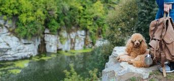 Vrouwenreiziger met hond en het bekijken natuurlijke canion met mening van de bergrivier royalty-vrije stock afbeeldingen