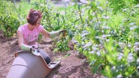Vrouwenscheuren van bladeren van een installatie, tuinzorg stock videobeelden