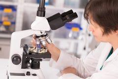 Vrouwenstudie van genetische gewijzigde GMO-installaties in laborator Stock Fotografie