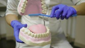 Vrouwentandarts met handschoenen die op een kaakmodel tonen hoe te de tanden met tandenborstel behoorlijk en net schoon te maken stock footage