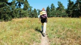 Vrouwentoerist met een rugzak die op een gebied van wildflowers in een nationaal park in het bos in de zomer lopen stock video
