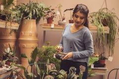 Vrouwentuinman die cactusinstallatie in een pot in serre planten Vrouwelijke werknemer die bij een cactustuin werken stock foto's