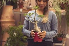 Vrouwentuinman die cactusinstallatie in een pot in serre planten Vrouwelijke werknemer die bij een tuin werken stock foto's