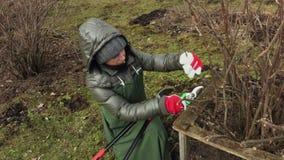 Vrouwentuinman met schaar dichtbij struik in tuin stock video