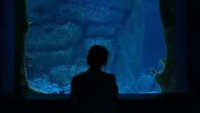 Vrouwenverblijf dichtbij grote aquariumtank, die op de vissen letten stock videobeelden
