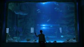 Vrouwenverblijf dichtbij grote aquariumtank, die op de vissen letten stock footage
