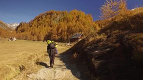 Vrouwenwandelaar die op de weg van dalingsgebieden dichtbij bomen lopen die dorp bereiken Na achter mening Zonnige de herfstdag d stock footage