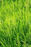 Vruchtbare groene vegetatie Stock Afbeeldingen