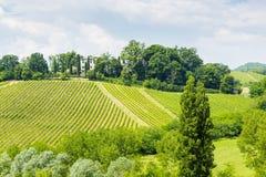 Vruchtbare Heuvels: Italiaanse Wijngaard Royalty-vrije Stock Foto's