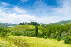 Vruchtbare Heuvels: Italiaanse Wijngaard Stock Afbeelding