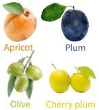 Vruchten 3 Royalty-vrije Stock Fotografie