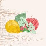 Vruchten als gravure uitstekende vector Stock Fotografie