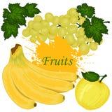 Vruchten, bananen, appel, druif geïsoleerde vector royalty-vrije illustratie