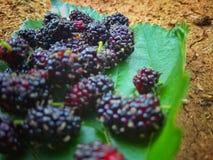 Vruchten, druiven, fruitig voedsel, stock afbeeldingen