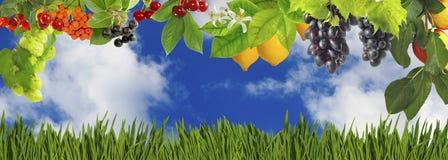 vruchten en bessen in de tuinclose-up royalty-vrije stock foto