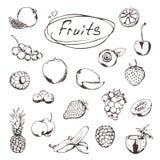 Vruchten en bessen, schetsen vector illustratie