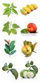 Vruchten en bladeren Stock Afbeeldingen
