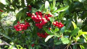 Vruchten en Boom Royalty-vrije Stock Afbeeldingen