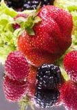 Vruchten en sla Stock Fotografie
