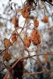 Vruchten, hopzaden verlaten voor de winter stock foto's