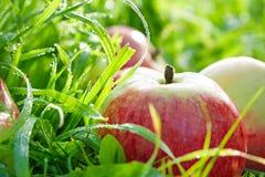 Vruchten liggen de rijpe, rode, sappige appelen op een groen gras Royalty-vrije Stock Foto
