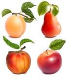 Vruchten met bladeren stock fotografie