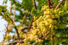 Vruchten met hoge vitamine Cinhoud stock fotografie