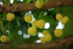 Vruchten met hoge vitamine Cinhoud stock foto's