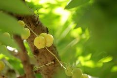 Vruchten met hoge vitamine Cinhoud royalty-vrije stock foto