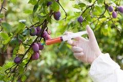 Vruchten met kunstmatige kleur worden gekleurd die Genetisch gewijzigd voedsel Royalty-vrije Stock Fotografie